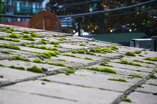 Eugene Roof Cleaning - Moss Removal